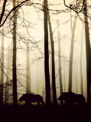 Le calendrier des chasses